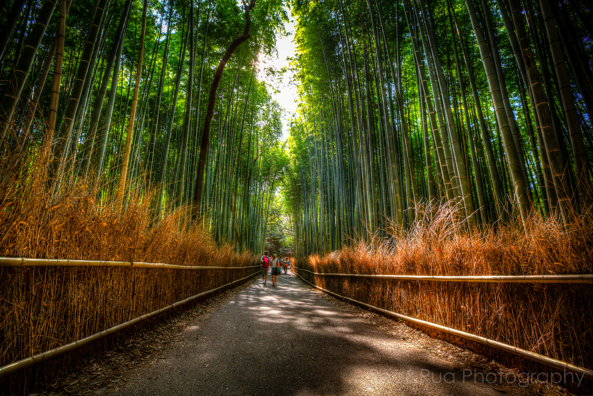 Photograph Bamboo forest Kyoto by Huy Tonthat on 500px