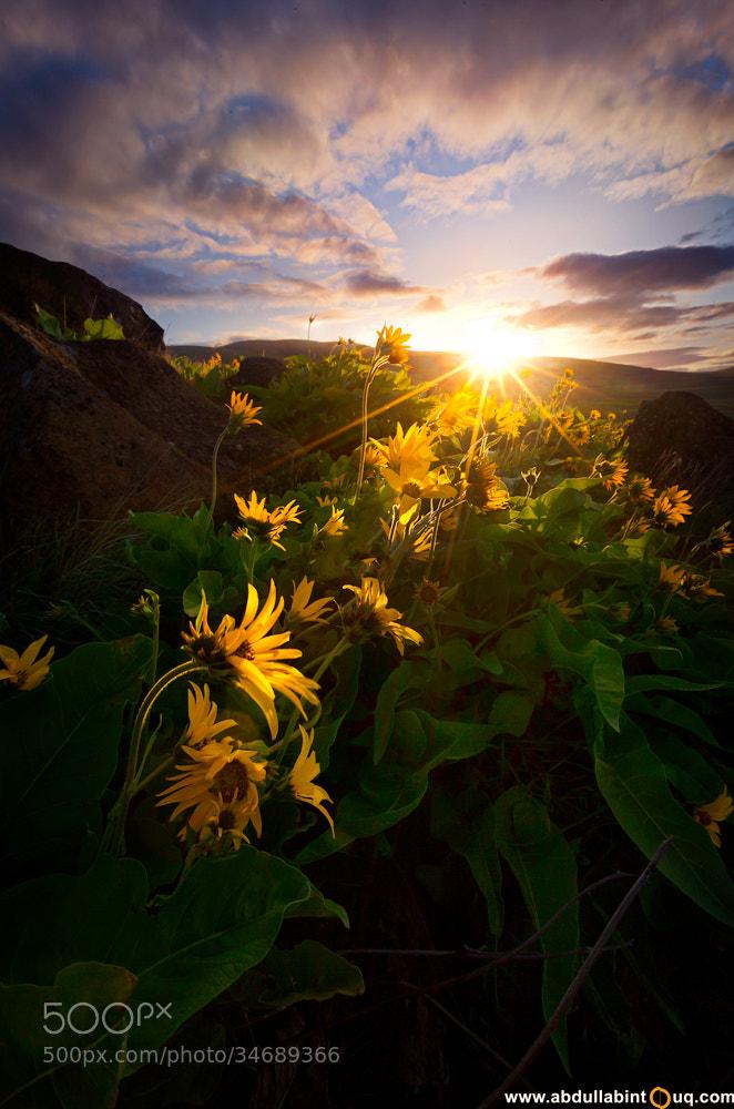 Photograph The Rising Sun II by Abdulla Bin Touq on 500px
