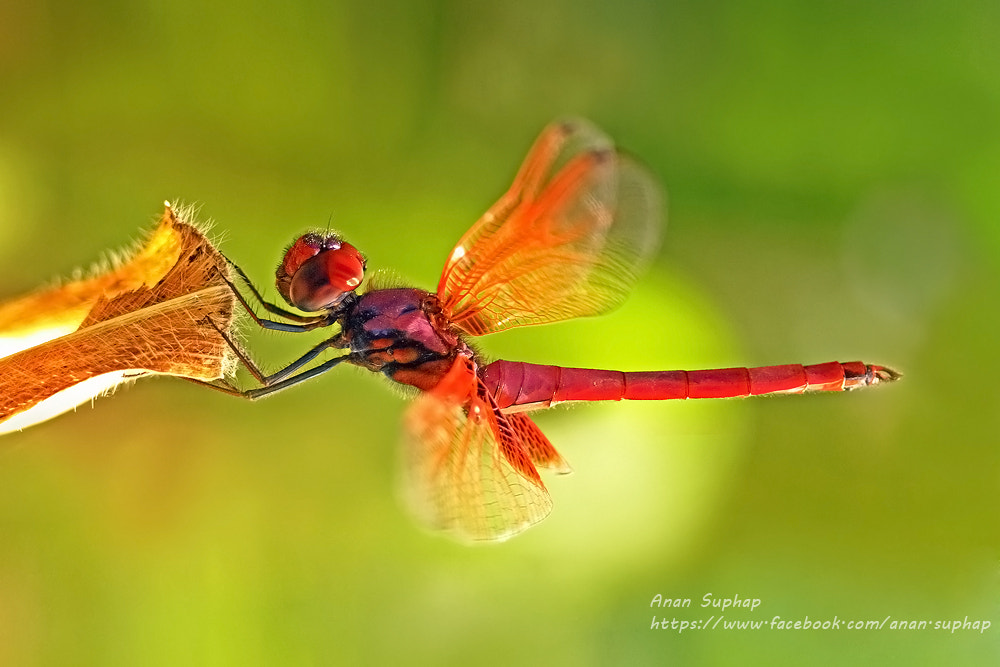 Photograph grace by Anan Suphap on 500px