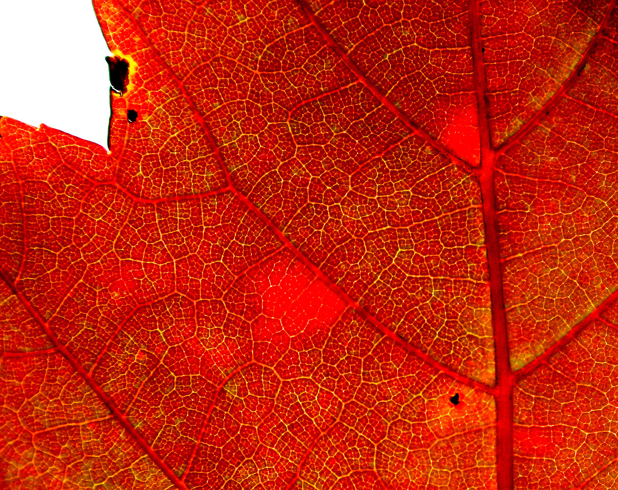 Photograph Leaf by Rick Macomber on 500px