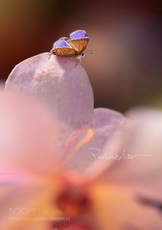 Photograph Wings by Lee Peiling on 500px