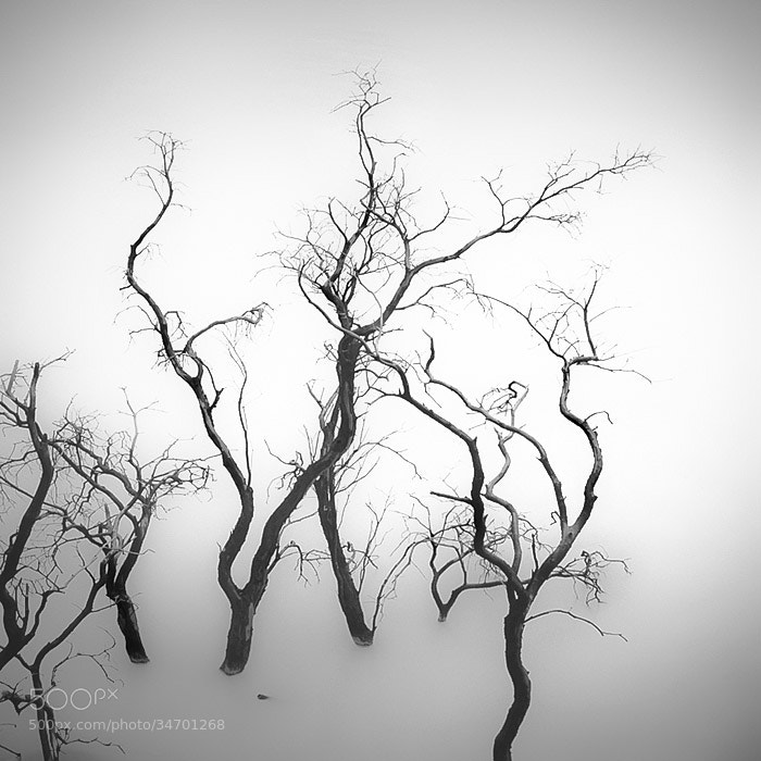Photograph Sparse  by Hengki Koentjoro on 500px
