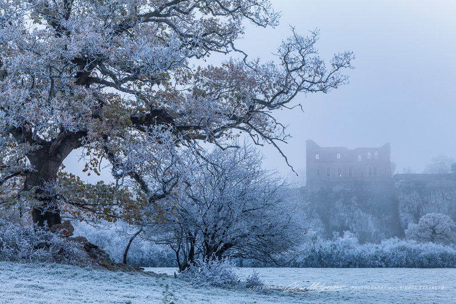 Photograph CHEPSTOW CASTLE AND OAK TREE IN FROST by COLIN MOLYNEUX on 500px