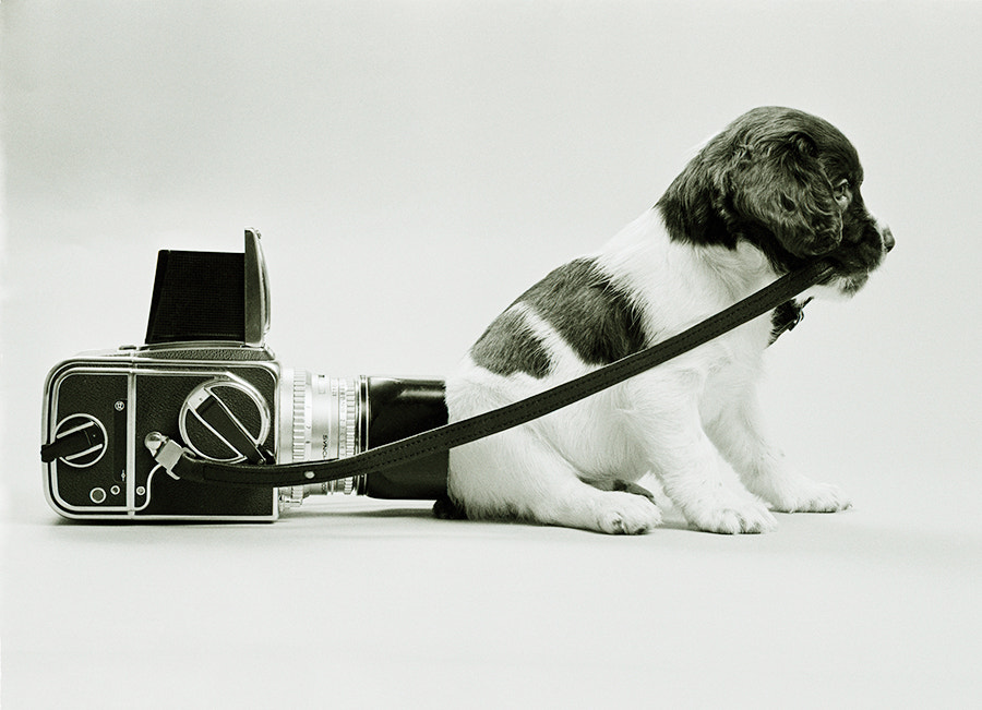 Photograph PUPPY AND HASSELBLAD by COLIN MOLYNEUX on 500px