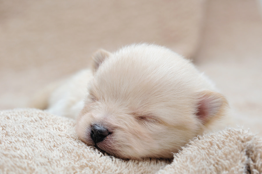 puppy by Tomoaki Yoshimi on 500px.com