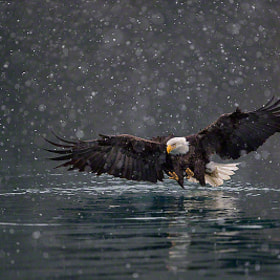 Bald Eagle Winter DreamScape