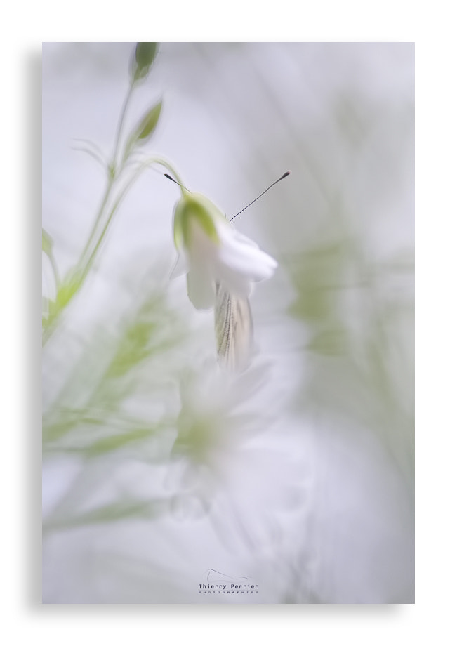 Photograph Papillon & atmosphère by Thierry Perrier on 500px