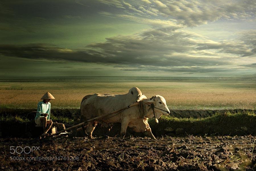 Photograph the farmer by budi 'ccline' on 500px