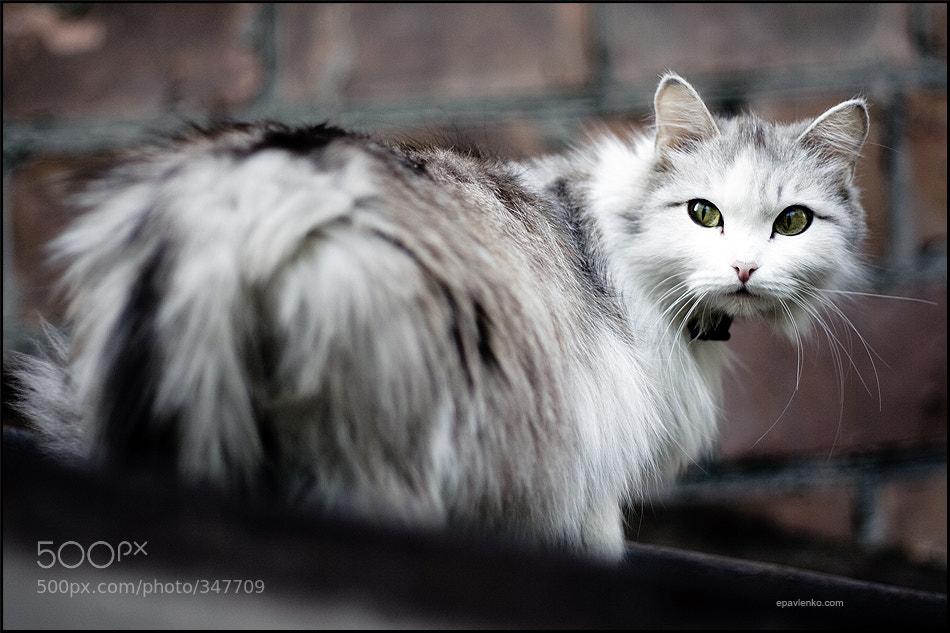 Photograph Cat by Evgeniy Pavlenko on 500px
