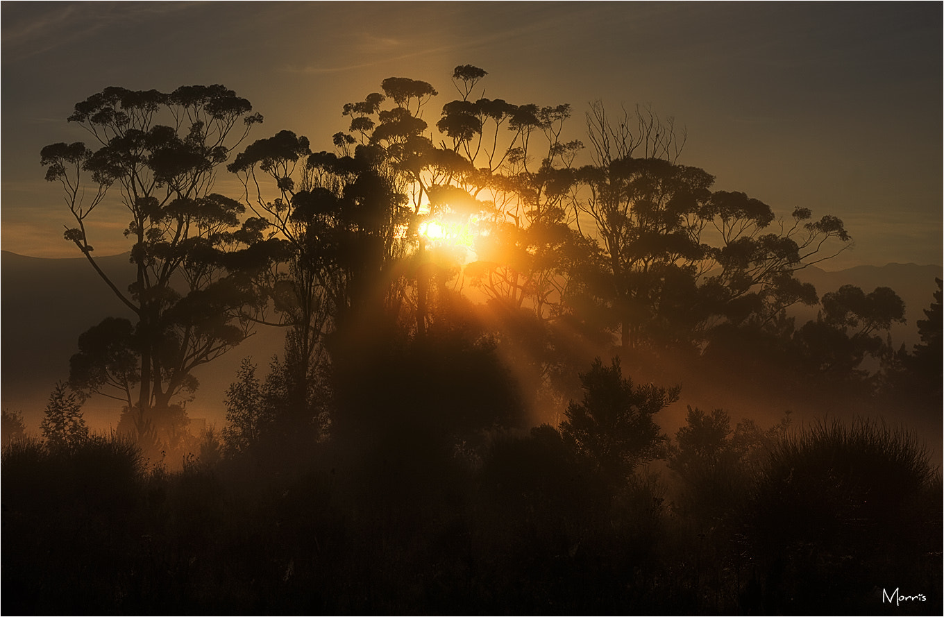 Photograph Morning Rays by Dave Morris on 500px