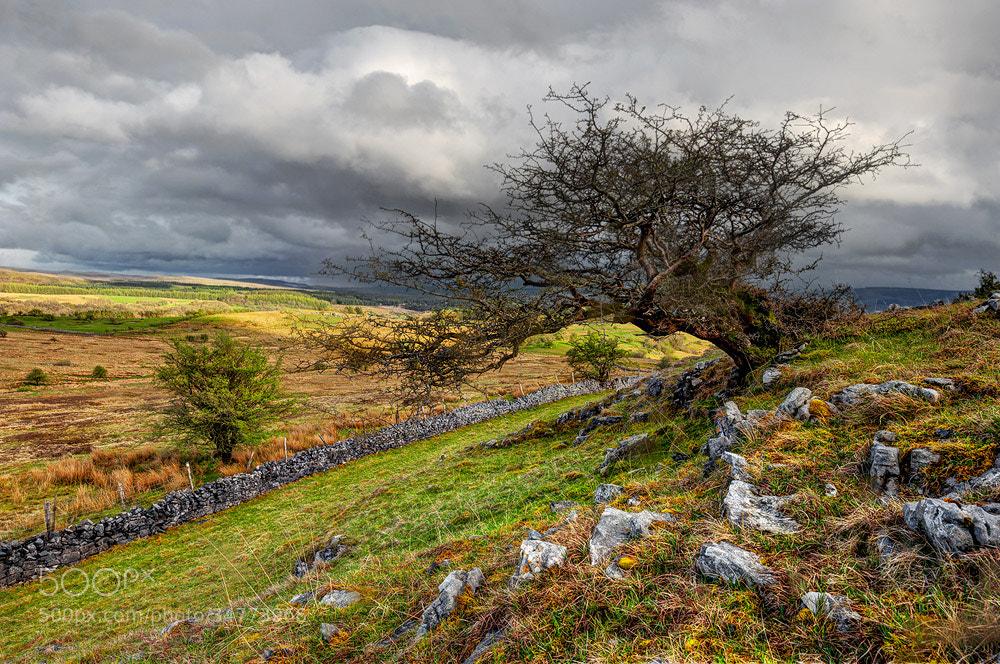 Photograph Windblown by Geoffrey Baker on 500px