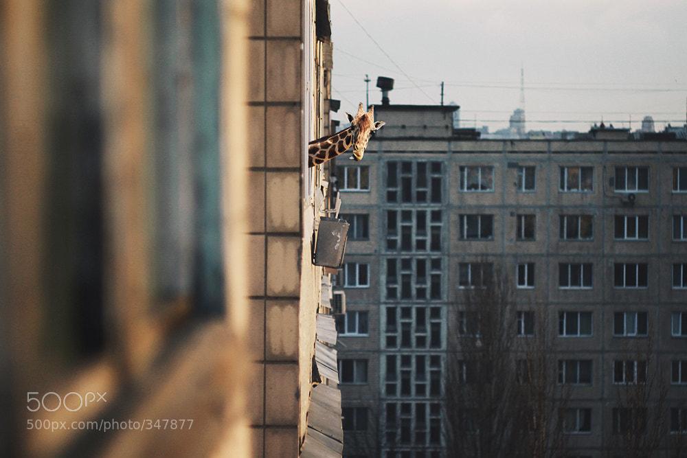 Photograph hi by Roman Lysenko on 500px