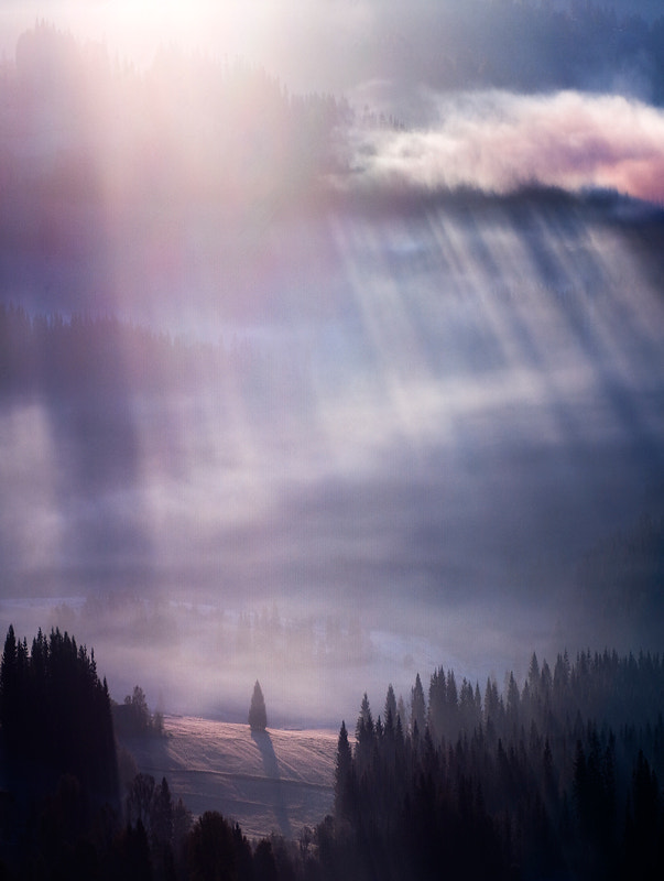 Photograph Pine by Marcin Sobas on 500px