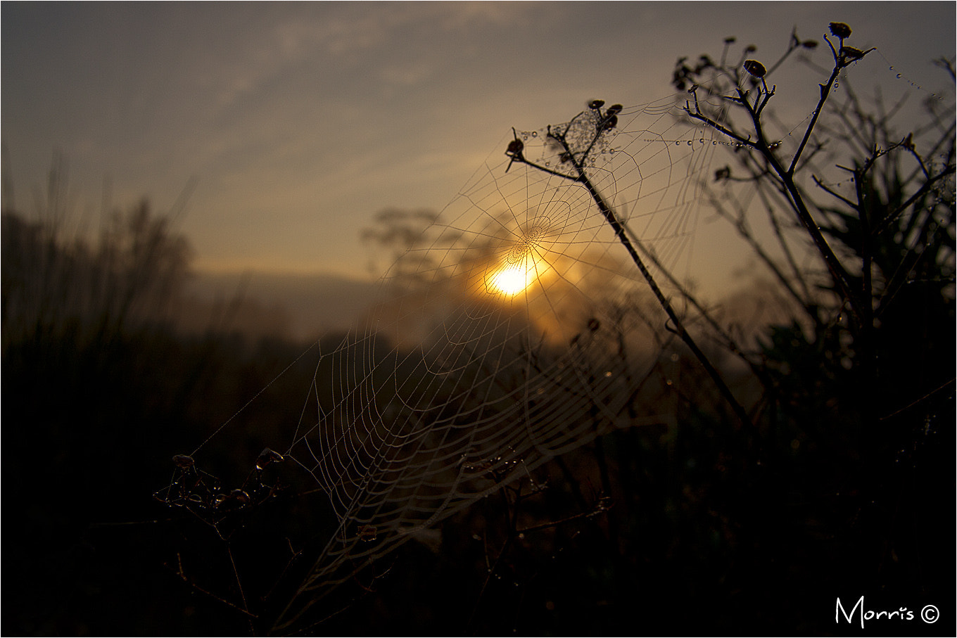 Photograph Morning Web by Dave Morris on 500px
