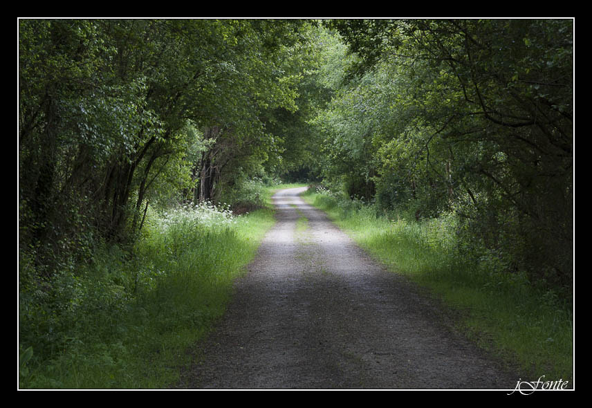 Photograph The green road by Jose Fonterosa on 500px