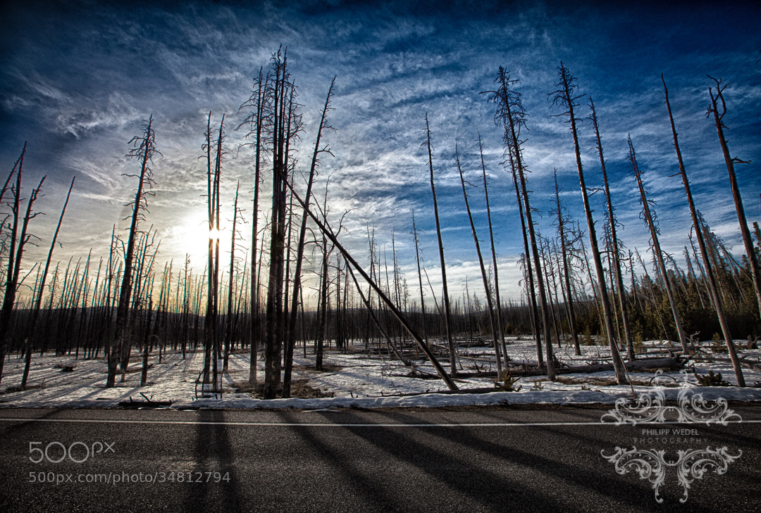Photograph Sunrise in the dead forrest by Philipp Wedel on 500px