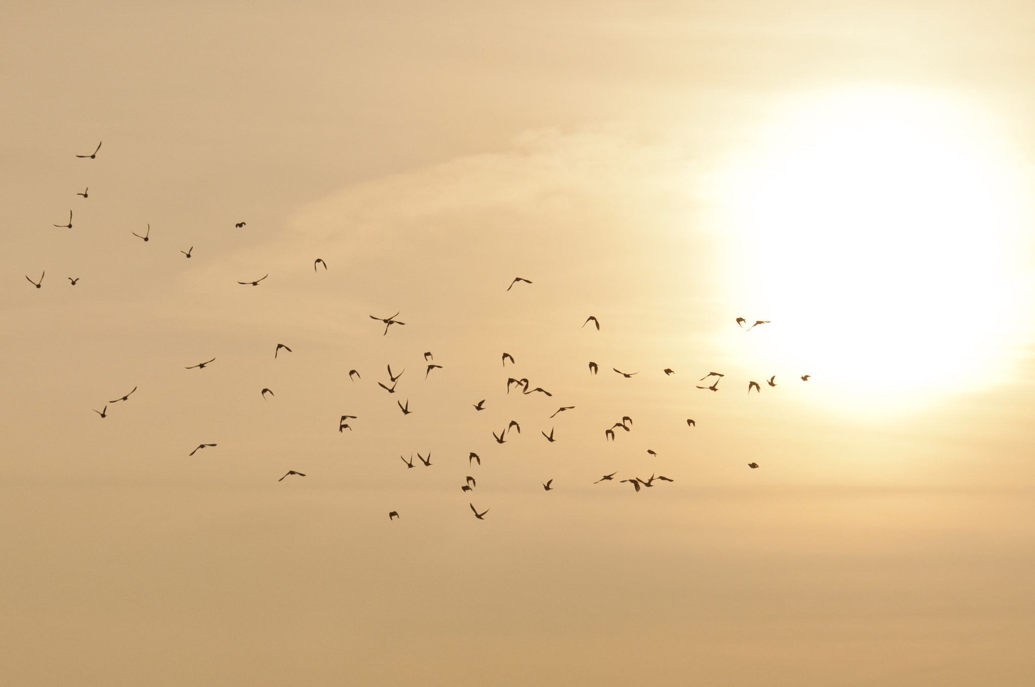 Photograph Starling murmuration at sunset by Graham Hush on 500px