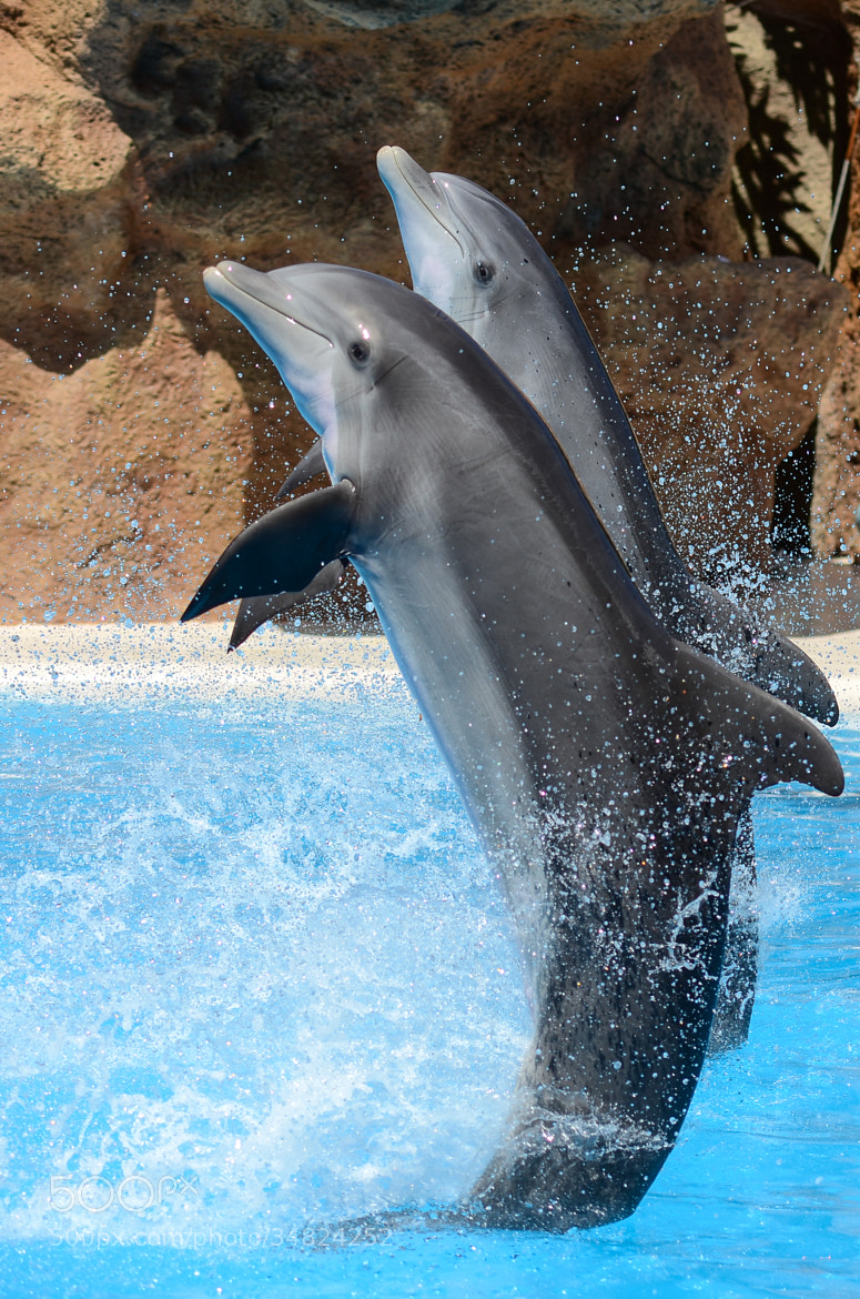 Photograph Dolphins #4 (°191) by Star Lee on 500px