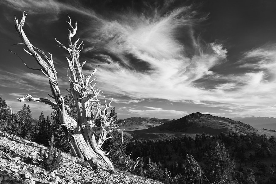 Photograph Bristlecone mono by Nicklaus Johnson on 500px
