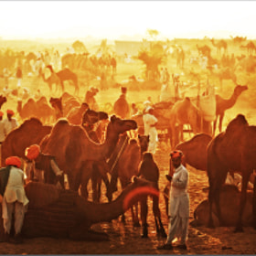 Pushkar Camel Fair in India