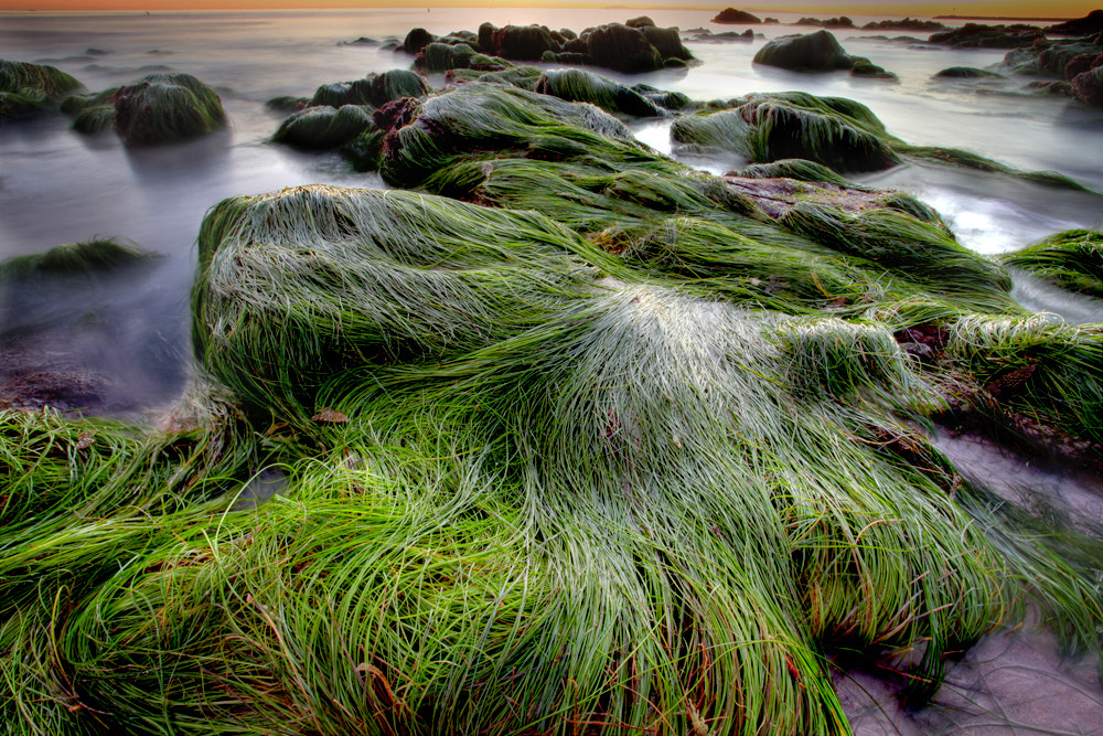 Photograph seaweed by Cheung Law on 500px
