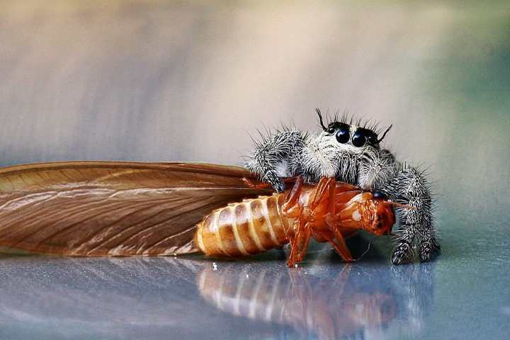Photograph This is mine by Agus Nonot Supriyanto on 500px