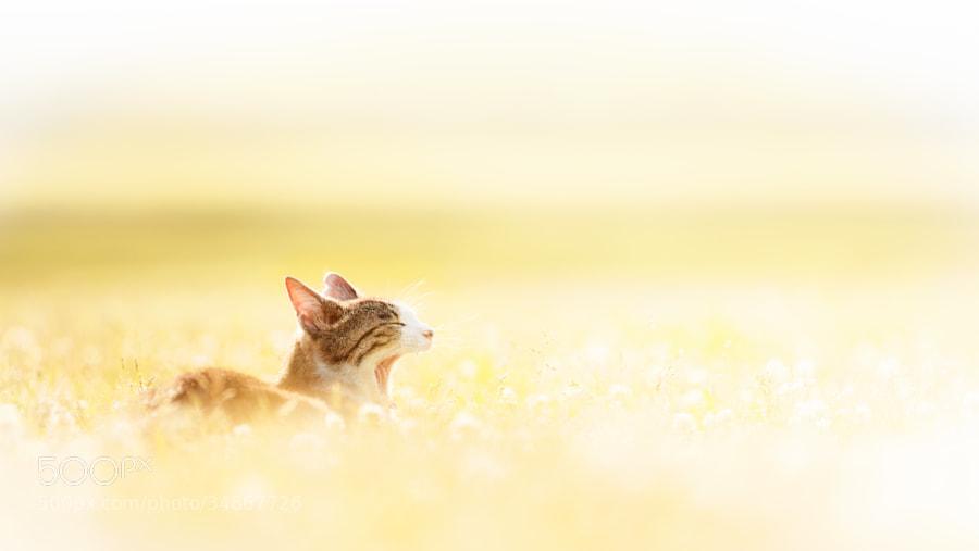 Photograph Beautiful Day by Seiji Mamiya on 500px