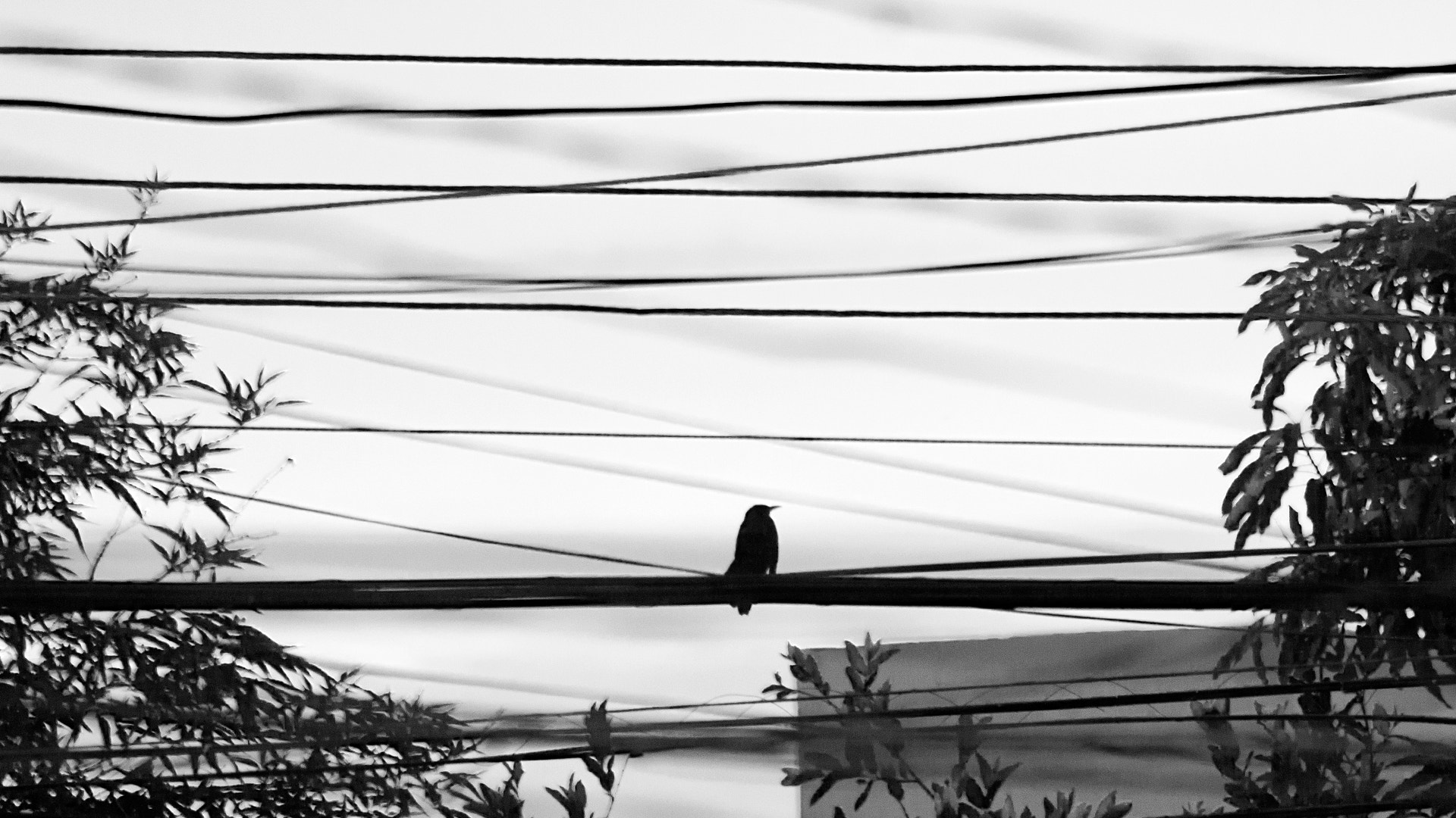 Photograph Bird on wires by Juan Benavides on 500px