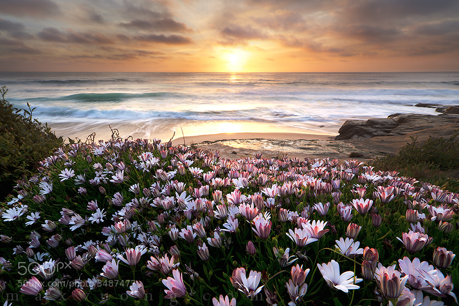 Photograph once upon an awakening (windansea, la jolla) by Max Vuong on 500px