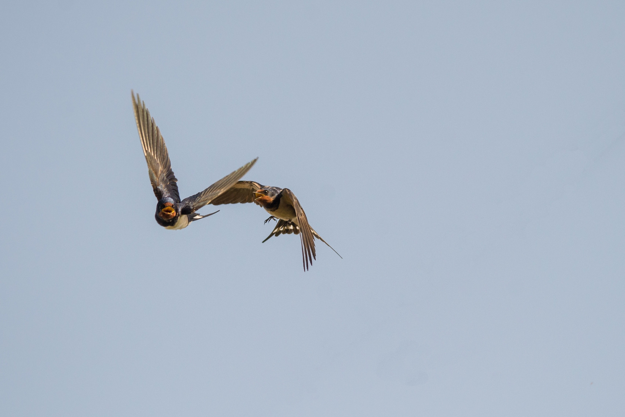 Photograph swallows (01) by Vlado Ferencic on 500px