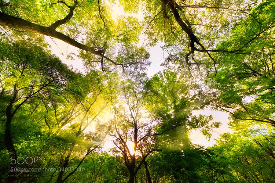 Photograph Deep Forest by Dariusz Łakomy on 500px