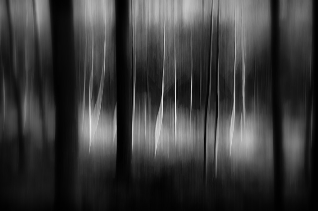 Photograph Fir and Alder by Adrian Mills on 500px