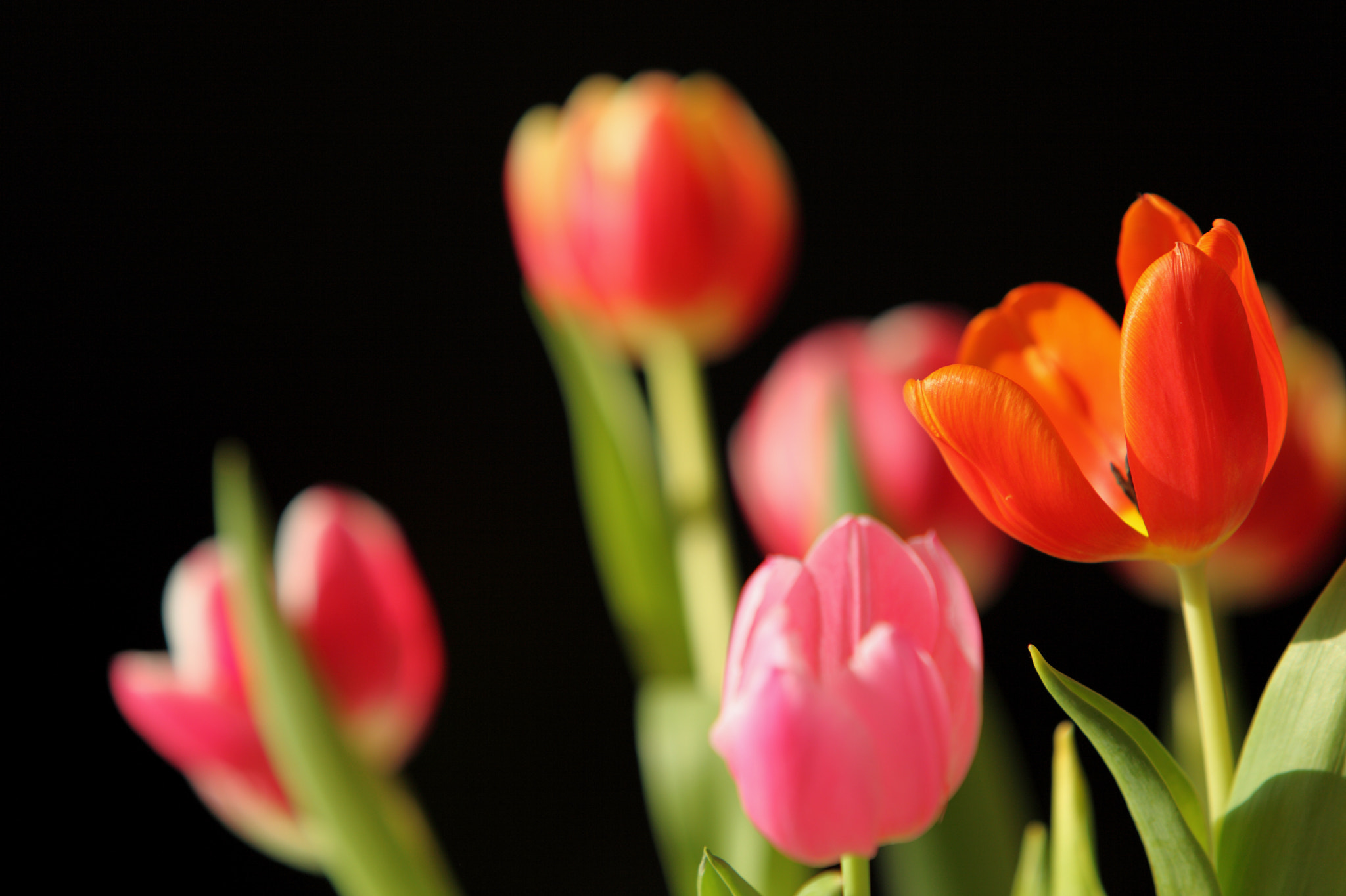 Photograph Tulips by Mathijs van den Bosch on 500px