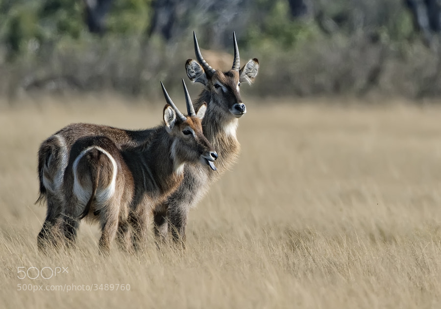 Taken in Hwange National Park, Zimbabwe