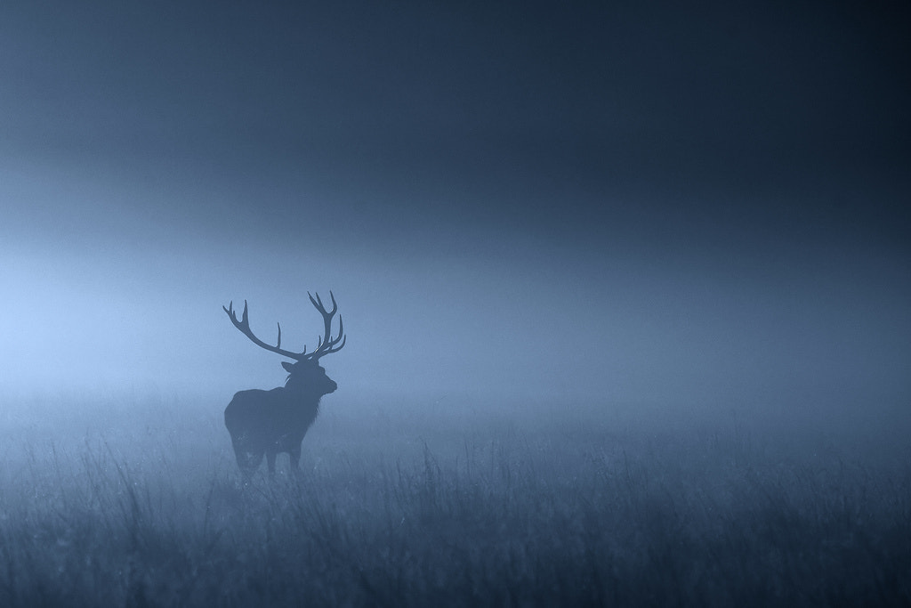 Photograph into the night.... by Mark Bridger on 500px