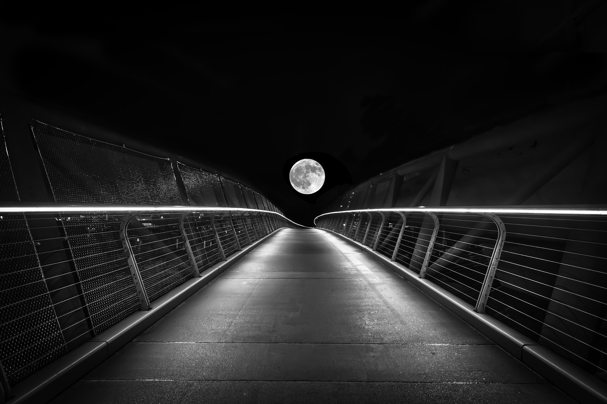 Photograph Howl at the moon by Kerim Hadzi on 500px