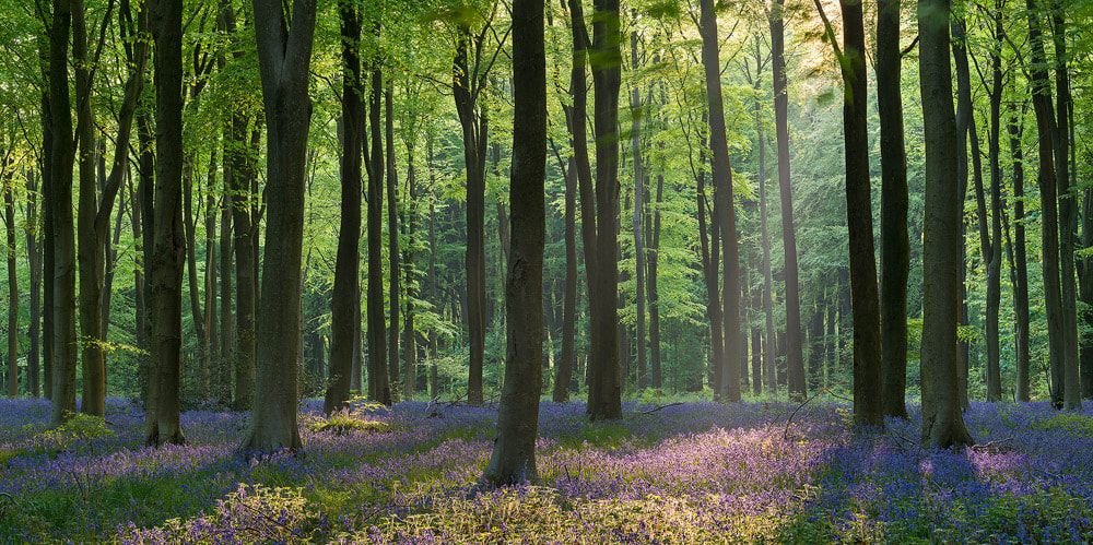 Photograph Colours of Spring by Adam Burton on 500px