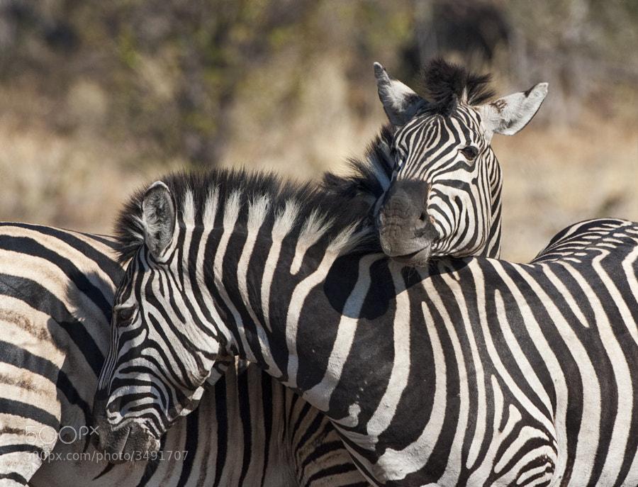 Taken in Kwando concession, Botswana