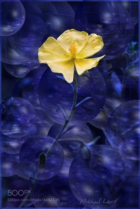 Photograph Just a flower by Mikhail Levit on 500px
