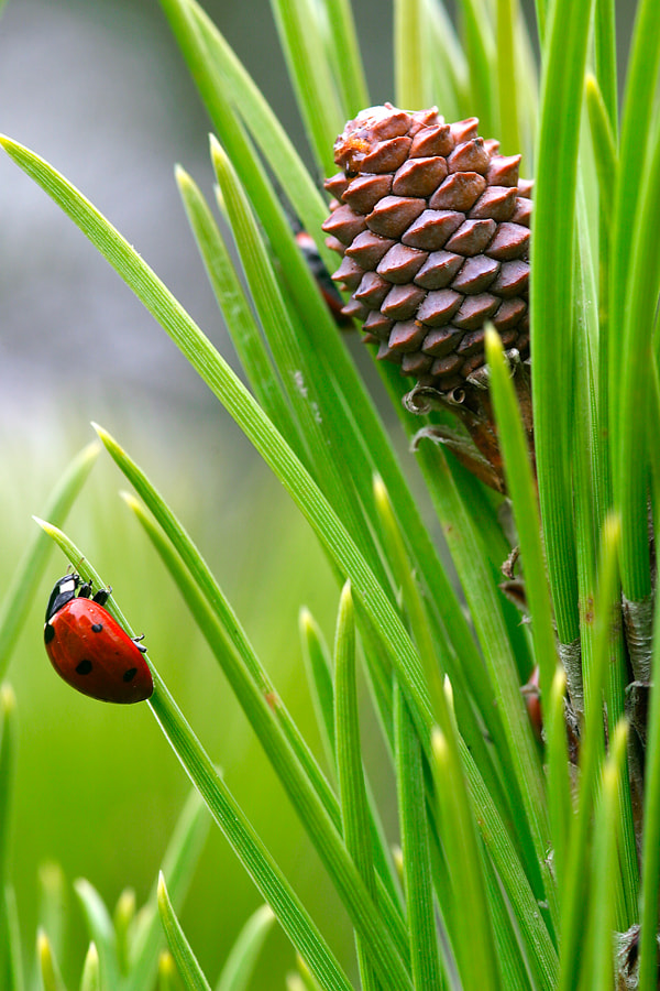 Photograph Ladybug and pineapple by Andrés López on 500px