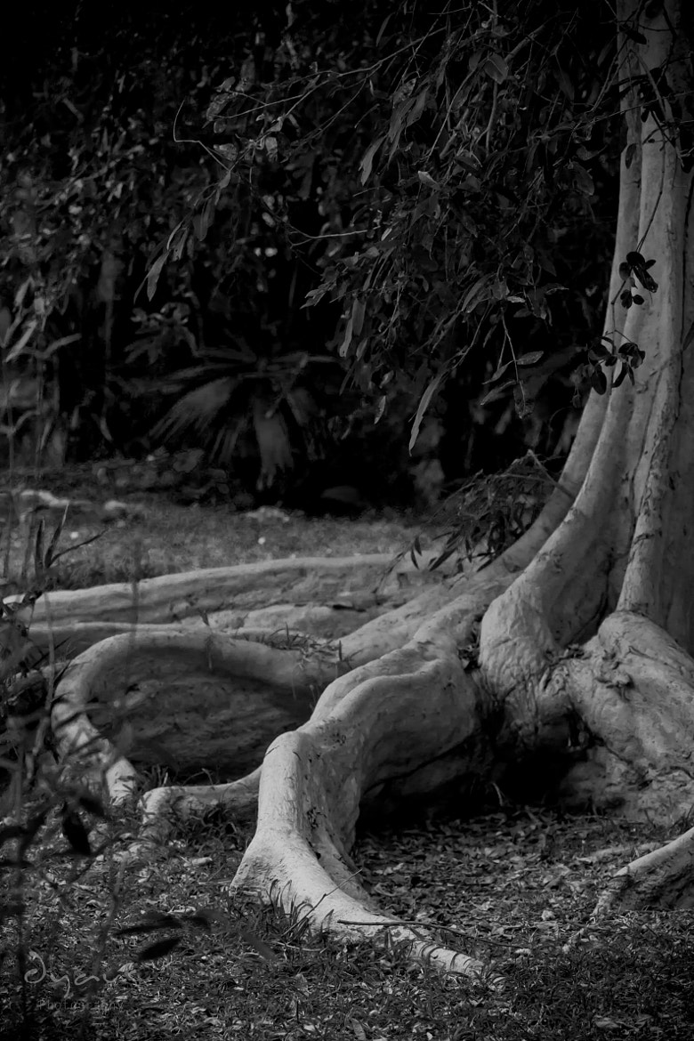 Photograph We all need roots by Raj Dyaus on 500px