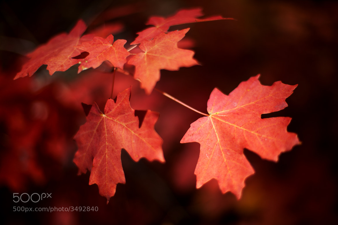 Photograph Oak Creek Leaves by Andrew Langdal on 500px