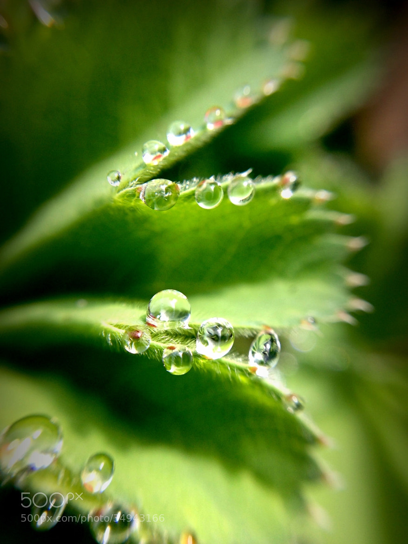 Photograph Morning dew by Karthik Gellia on 500px