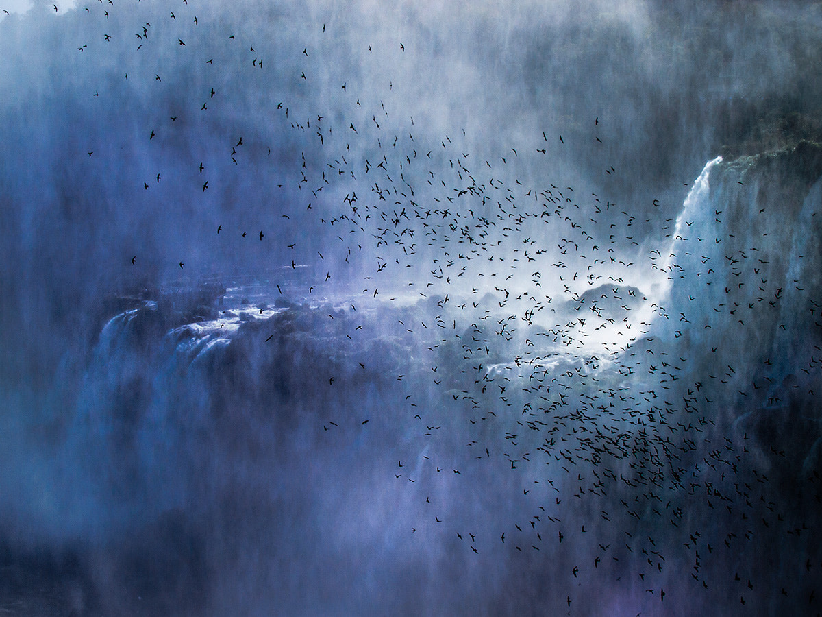 Photograph Swifts over the fall. by Francesco Filippo Pellegrini on 500px