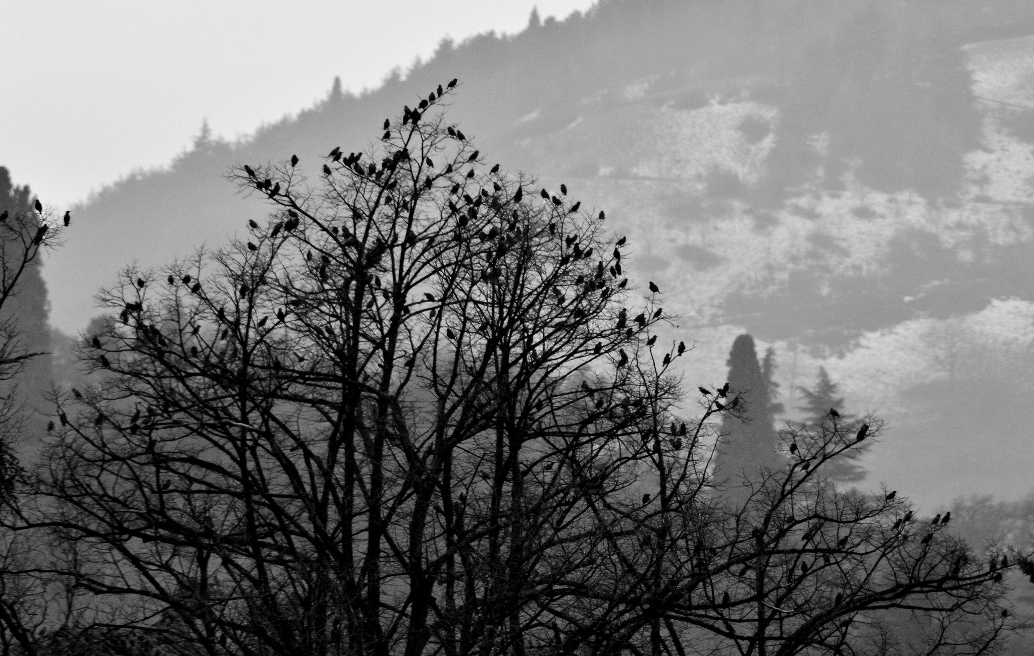 Photograph Bird Tree by Stefano Zocca on 500px