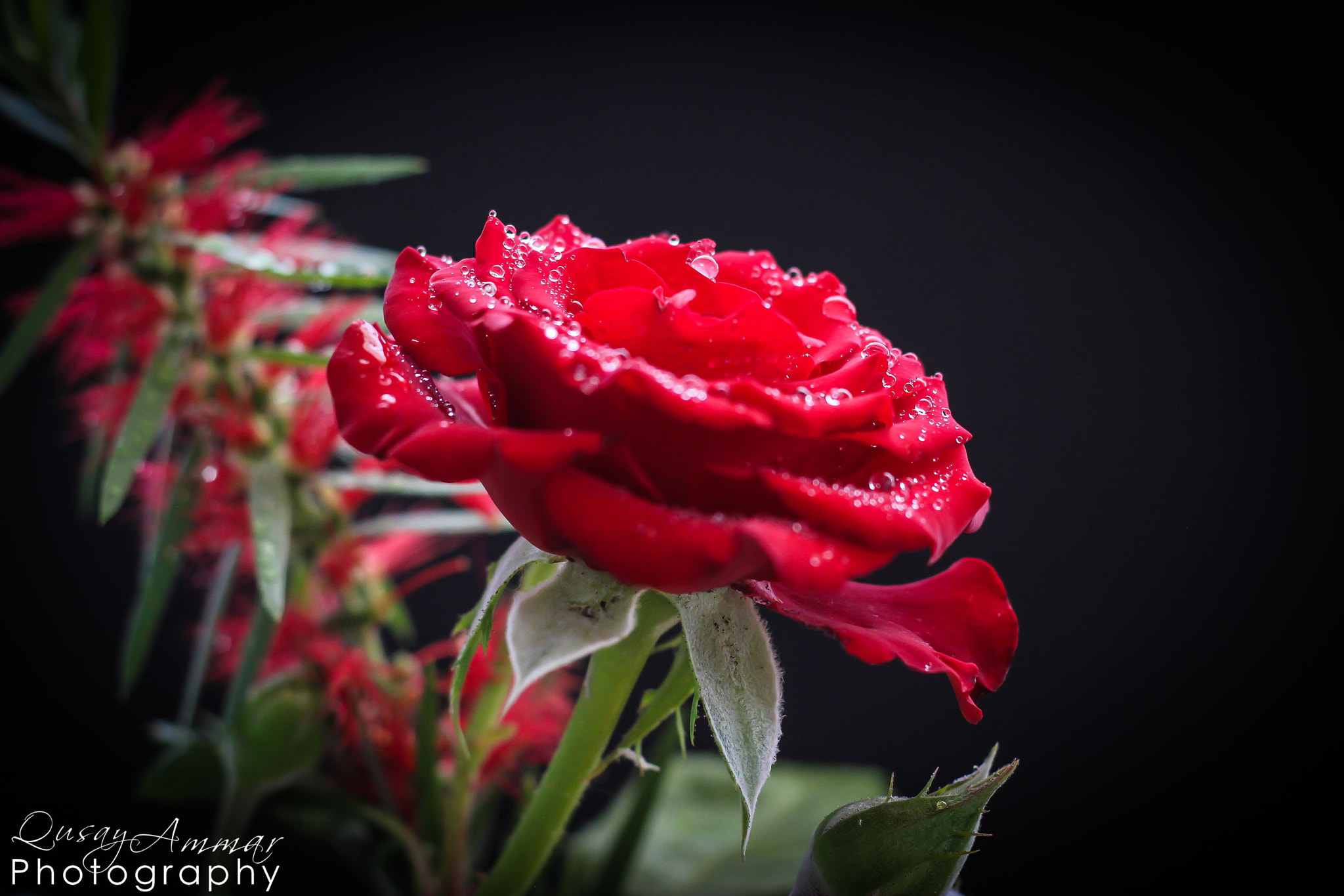 Photograph Just Red  by Qusay Abo Baker on 500px