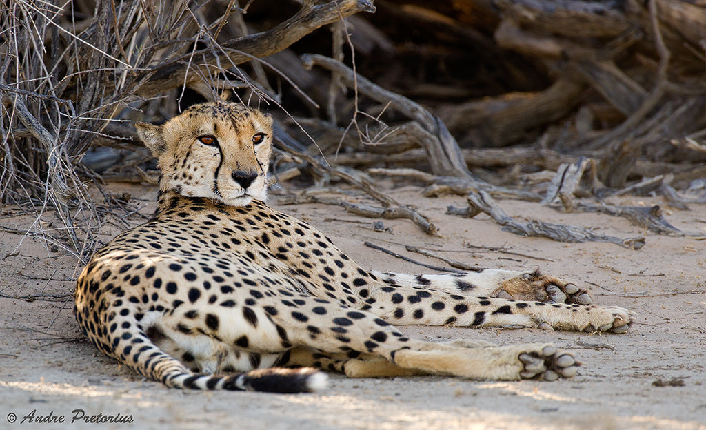 Photograph One Brother. by Andre Pretorius on 500px