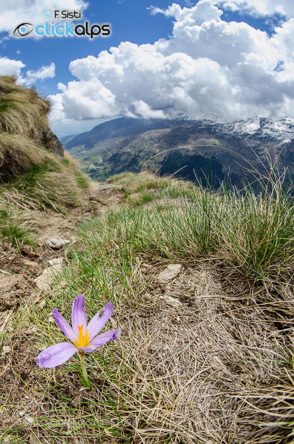 Photograph Il sapore della Primavera... (Valchiusella, Canavese, Piemonte) by Francesco Sisti on 500px