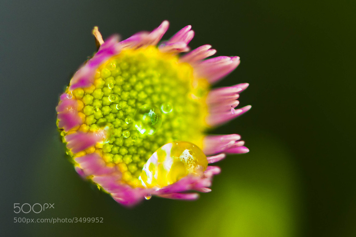 Photograph Menta, limón y fucsia by Mercè Gost on 500px