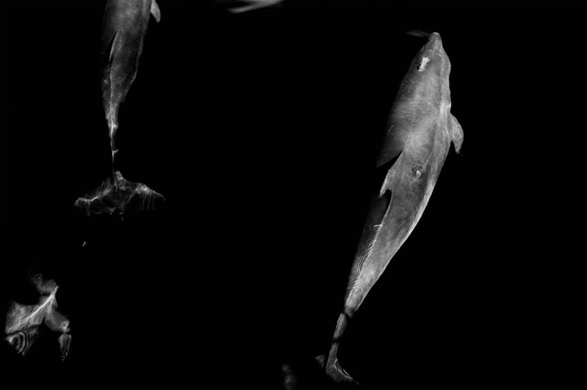 Photograph Delfin by  Mata on 500px
